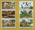 1931 Liebigbilder-Die Ameisen Liebig 1013# guter zustand  11,95 EUR  +  6,50 EUR shipping