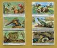 1932 Liebigbilder-Tierfreundschaften Liebig 1028# guter zustand  5,95 EUR  +  6,50 EUR shipping